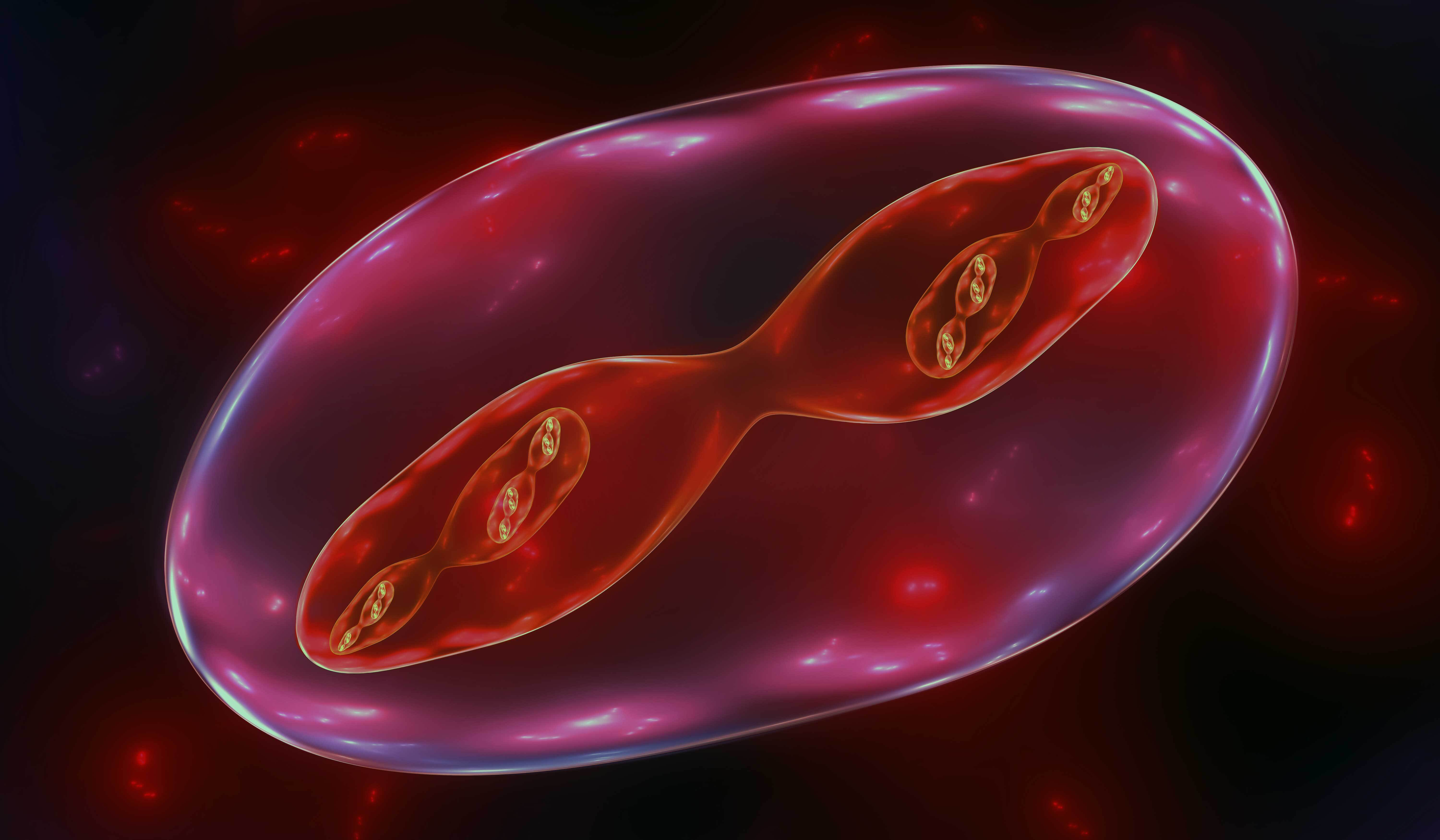 Meiosis: the causes and consequences of sex