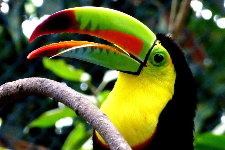 A big data cyberinfrastructure to keep pace with Colombia's natural capital