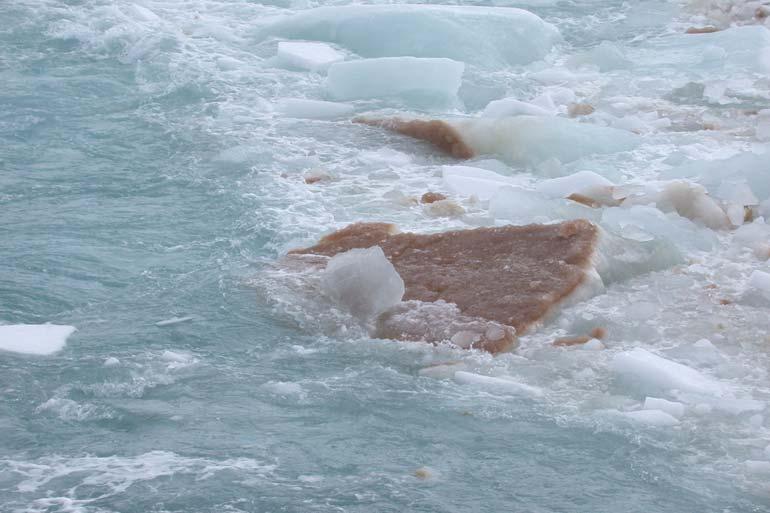 Genome sequence of a polar alga explains adaptation to extreme climates