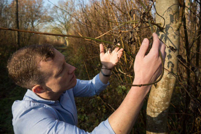 Mark McMullan inspects a tree affected by the Ash Dieback pathogen