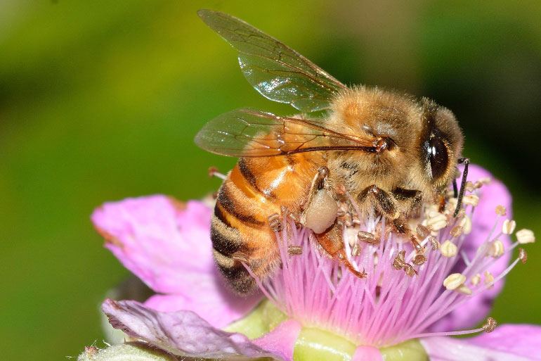 Where are the bees? Tracking down which flowers they pollinate