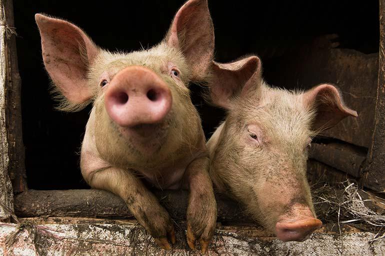 The economic cost of swine flu