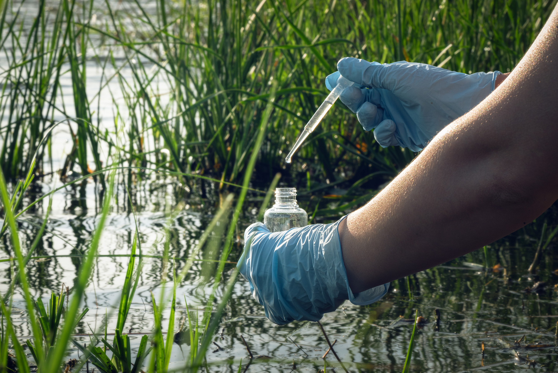 Image of sample collection from a body of water with green plants, the person is wearing blue gloves using a plastic pipette