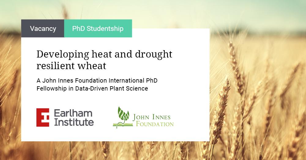 Image: Advert for Resilient Wheat - a John Innes Foundation PhD Fellowship