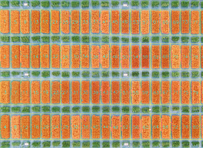 AirSurf aerial image of crop field