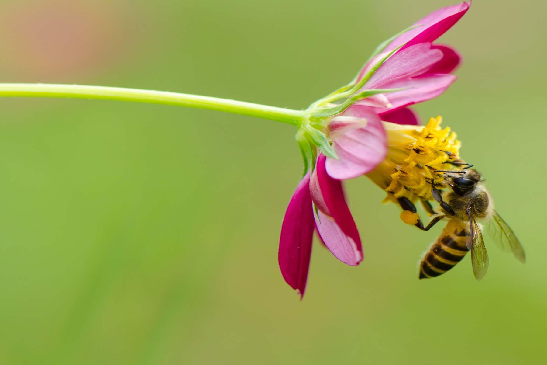 Understanding bee pollen sources