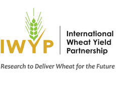 International wheat yield partnership logo