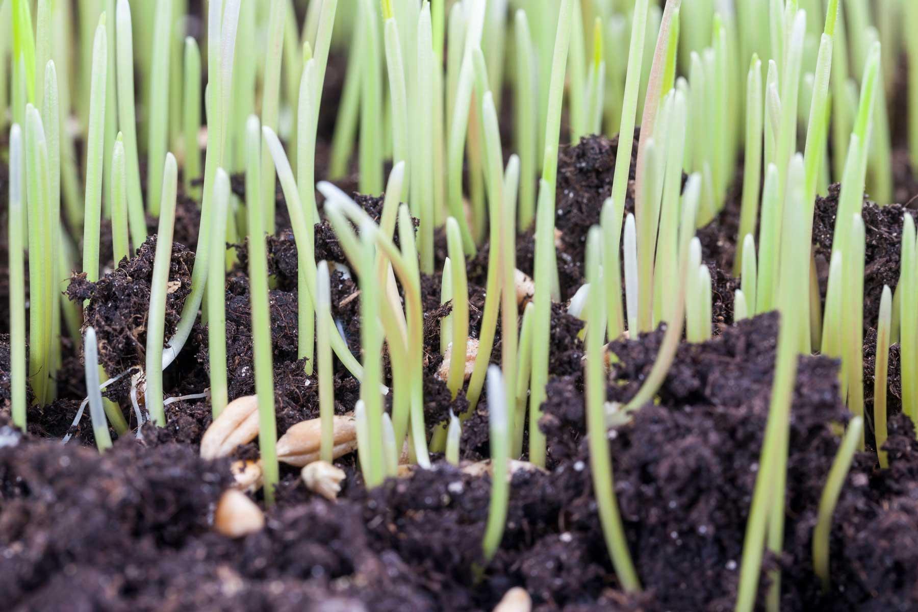 Seed Germ