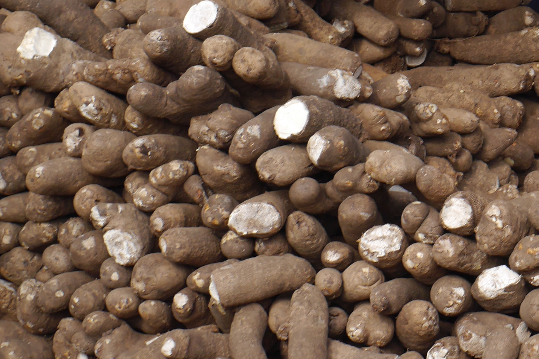 Understanding sex in the white Guinea yam