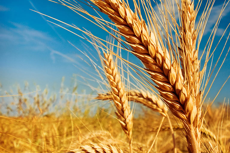 Commodity Market Review : Wheat Futures Peaked Amid Wet Weather Concerns